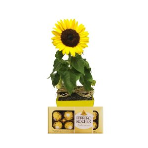 Girassol Plantado no Cachepot para Presente + Ferrero Rocher