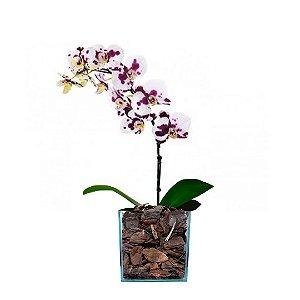 Orquídea Dálmata com 01 Háste no Vidro
