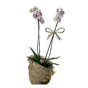 Orquídea Dálmata no Vidro Redondo