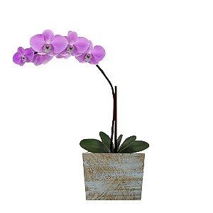 Orquídea Lilás com 01 Háste na Madeira