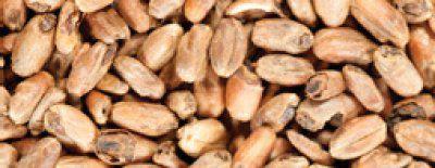 Malte Weyermann Carawheat 100g