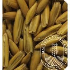 Malte Catarinense Dourado de Aveia 100g