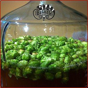 Dry Hop: realçando o aroma do lúpulo