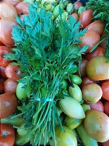 Cheiro Verde (Cebolinha e Salsinha) Pacote - Agro Top