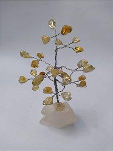 Árvore da Felicidade Citrino