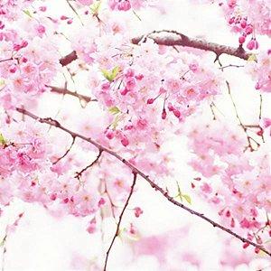 Essência Aroma Flor de Cerejeira 100ml