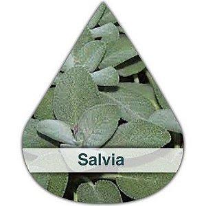 Essência Silver Salvia DM