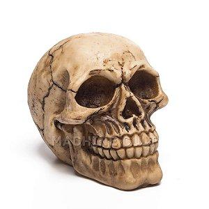Crânio de Caveira