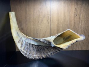 Shofar de Carneiro Modelo 6