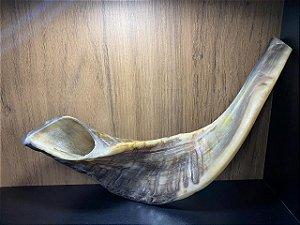 Shofar de Carneiro Modelo 7