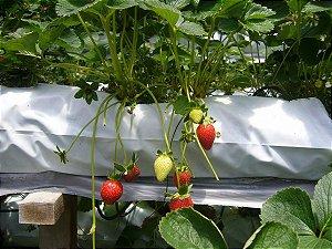 Slab Saco Plastico Branco Para Plantio de Morango 33cm X 160cm