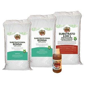 Kit Para Começar a Plantar Bonsai do Jardineiro Amador