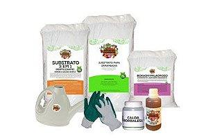 Kit Para Plantar Samambaias