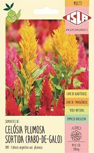 Sementes de Rabo-de-Galo / Celósia Plumosa Sortida