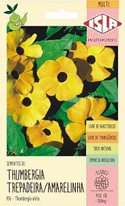 Sementes de Thumbergia Trepadeira / Amarelinha