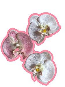 Kit trio de orquideas M