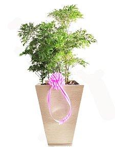 Arranjo de Árvore da Felicidade no Vaso de Polietileno