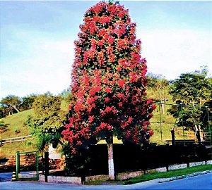 Pau Formiga - 1,80 a 2,20 metros