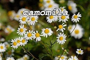 Você sabia que dá pra vaporizar plantas medicinais e aromáticas?