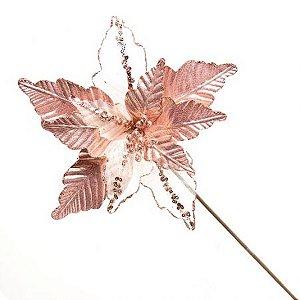 Poinsetia Felice Rose 50cm
