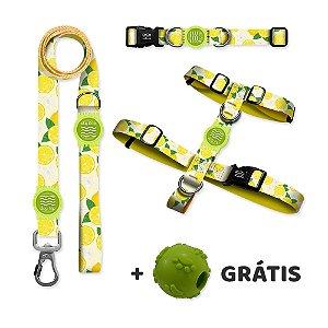 Guia Premium + Coleira Premium + Peitoral H Lemon