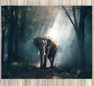 Quadro Decorativo Elefante