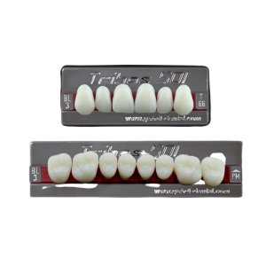 Dente Tribos 501