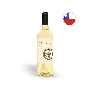 Vinho Chileno Branco Cantagua Classic Sauvignon Blanc Garrafa 750ML