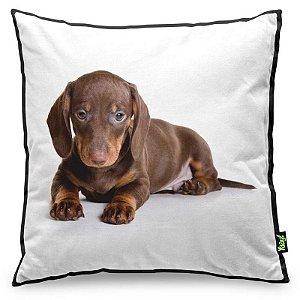 Almofada Love Dogs Black Edition - Dachshund Salsicha