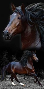 Toalha Praia Buettner Brow Horses 7590