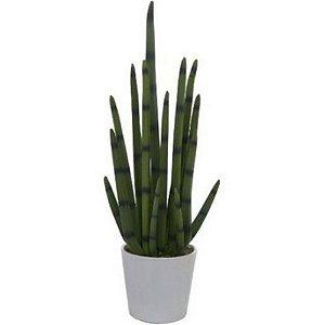 Planta Rabo de Tatu Artificial Com Vaso Cerâmica Branco
