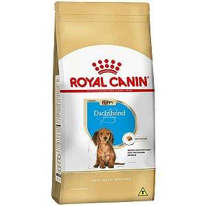 Ração Seca Royal Canin Puppy Dachshund para Cães Filhotes 2,5 Kg