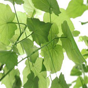 Painel Fotográfico em Folhas Verde