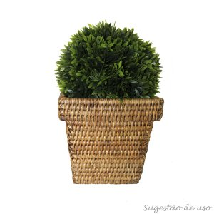 Bola Podocarpus