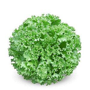 BS AC0068 (125 sementes / 5g)