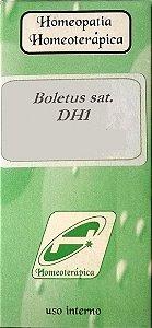 Boletus sativus DH1 30 gramas