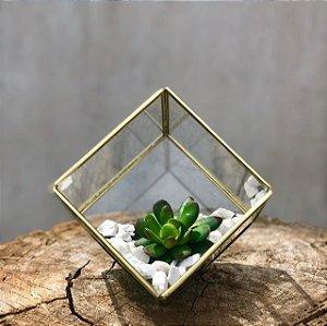 Terrário Cubo Ouro