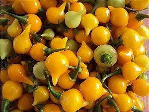 Pimenta Biquinho Amarela: 40 Sementes