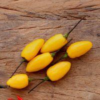 Pimenta Fidalga: 10 Sementes
