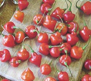 Pimenta Piãozinho: 20 Sementes