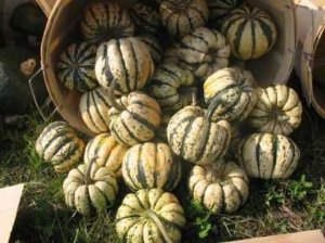 Abóbora Sweet Dumpling Winter: 7 Sementes