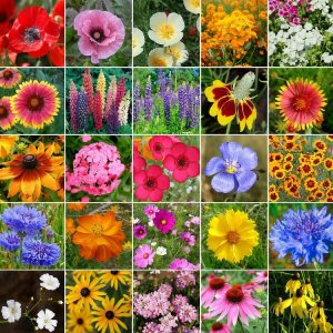 Flores Sortidas: 300 Sementes