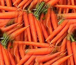 Cenoura Comprida: 100 Sementes