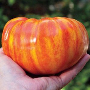 Tomate Big Rainbow: 20 Sementes
