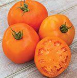 Tomate Laranja: 20 Sementes