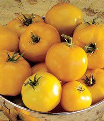 Tomate Lemon Boy: 20 Sementes