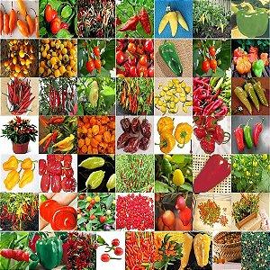 Pimentas Sortidas: 100 Sementes