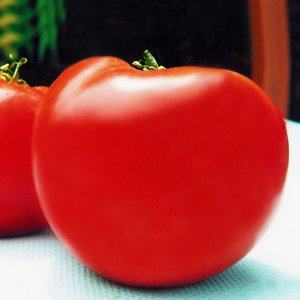 Tomate Paulista Santa Cruz Kada: 20 Sementes