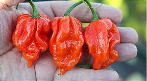 Pimenta Naga Viper: 10 Sementes