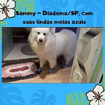 cliente Sammy Diadema